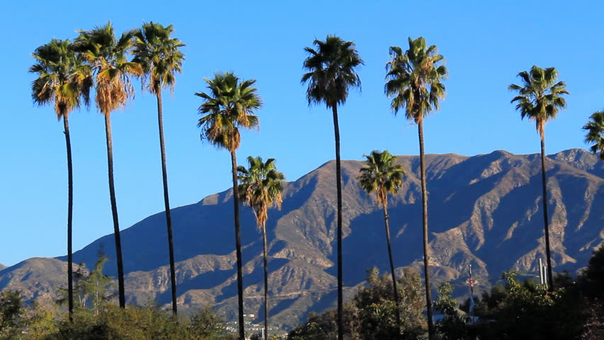 Image result for pasadena palm trees