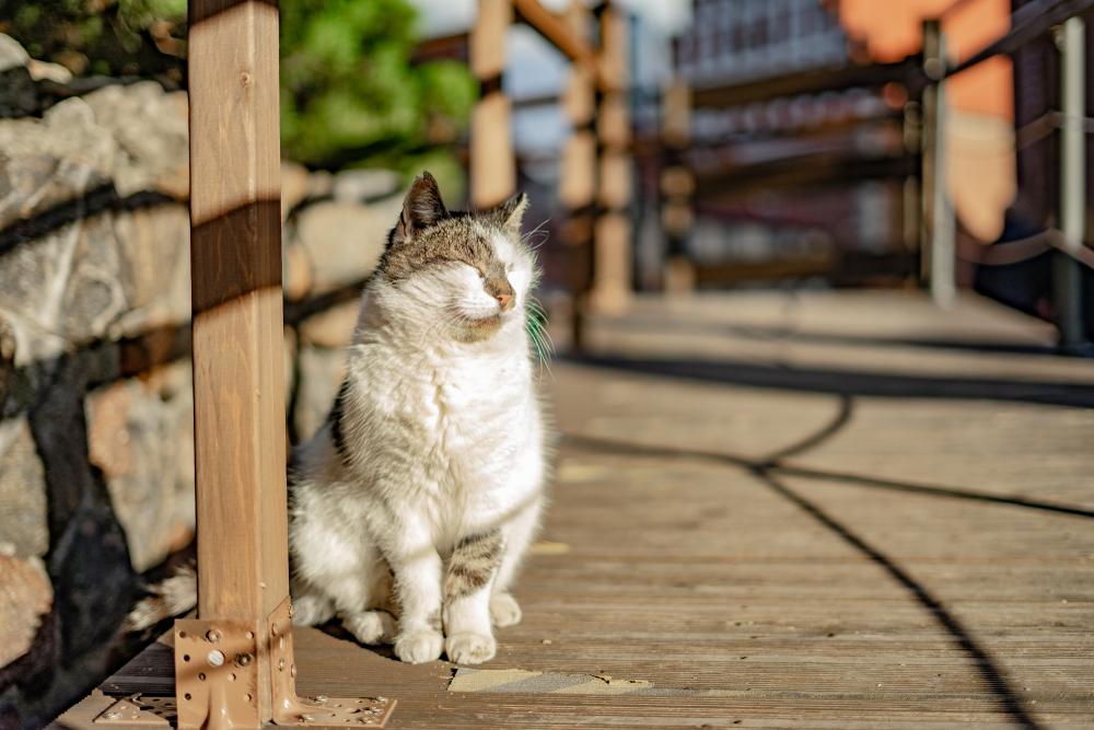 mèo đực hay cái đều có ưu nhược điểm riêng