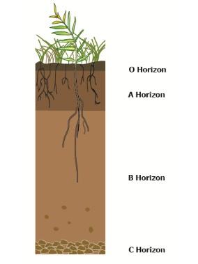 Image result for soil horizons