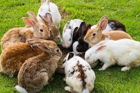 ผลการค้นหารูปภาพสำหรับ กระต่ายการแสดงอาณาเขต