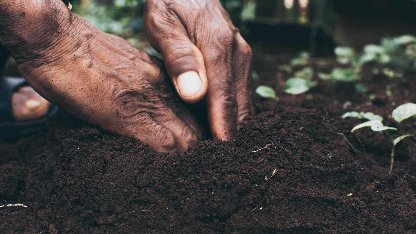 how to grow carrots: hand in the soil