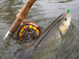50 риби в час