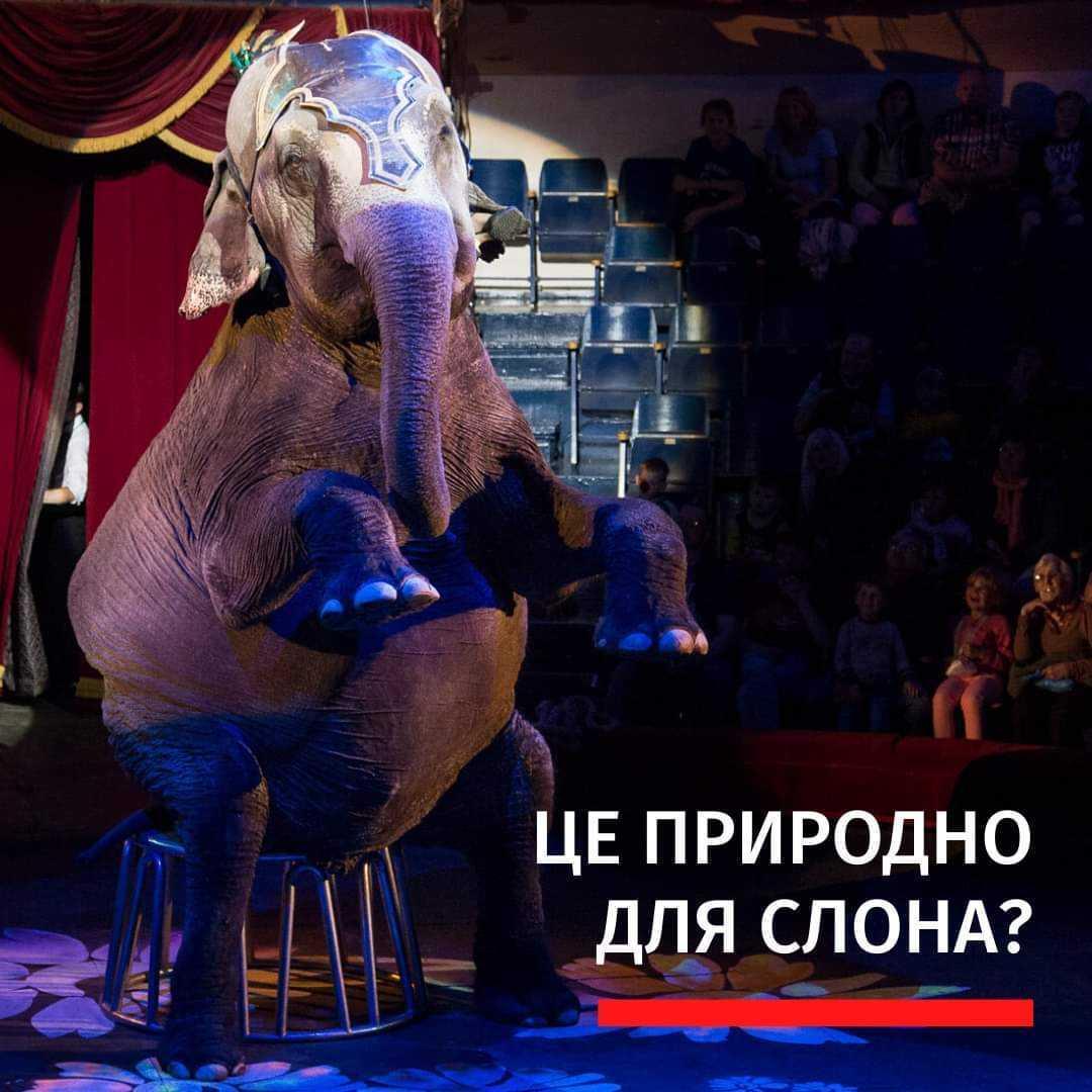 тварини в цирку