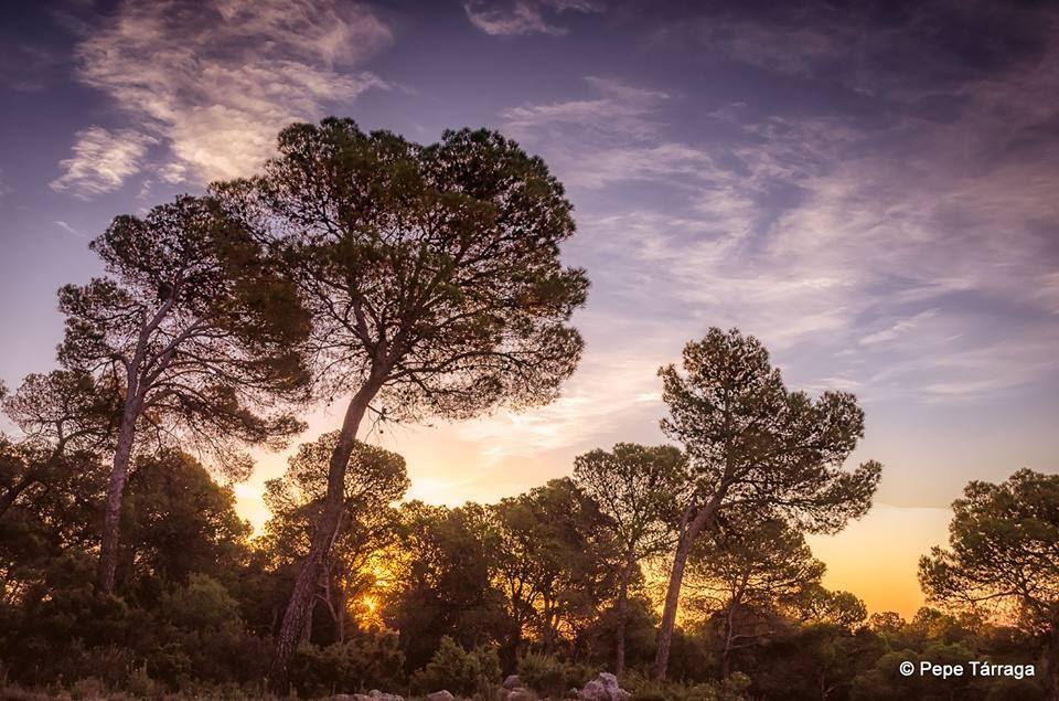 La imagen puede contener: nubes, cielo, árbol, planta, exterior y naturaleza