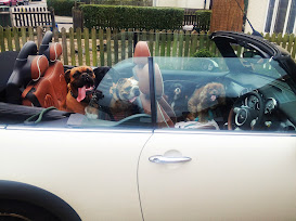 Pet taxi dogs travel in style with Chelsea Dogs