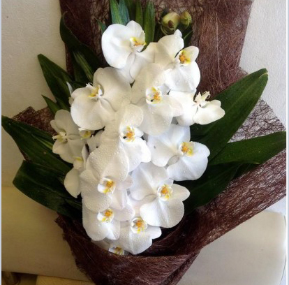 bó hoa lan
