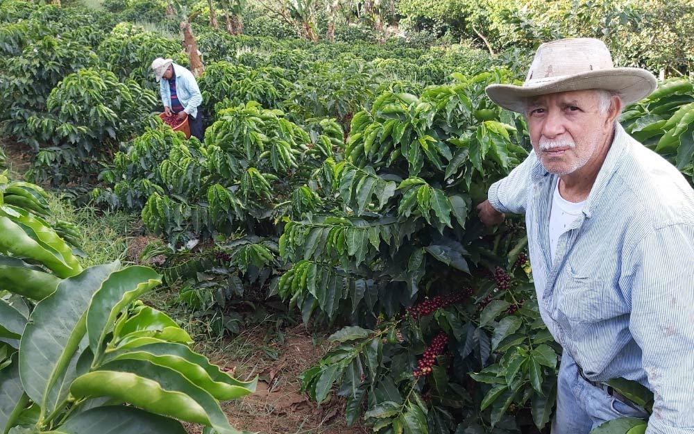 produtor de café