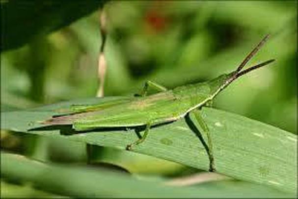 Diễn đàn rao vặt tổng hợp: Những loài côn trùng có ích bà con nông dân nên biết TnsxB8_Vhp9sM1MffKB6zWEv2Bk1YKpuvJJF844rLsJ7arh9wWAZx4oINpFij31yIw5xiGSF1aoQPLFJd-qttJSSr2YpjBwdJM2_34a8PW-Pw_nO6qAcaJsdKqDh_M2R4PV2B_x-