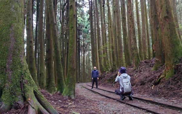 特富野古道-鐵道森林步道