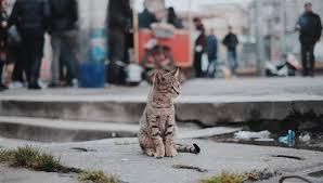 ผลการค้นหารูปภาพสำหรับ เดินหนีแมว