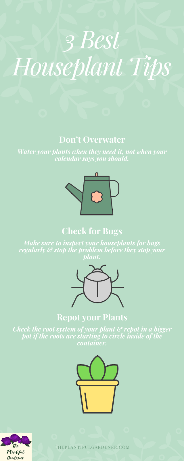 houseplant tips infographic picture