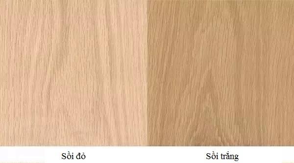 Gỗ sồi được chia thành hai loại gỗ sồi trắng và gỗ sồi đỏ