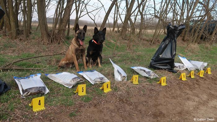Собаки Фалько и Карло в Венгрии c обнаруженными доказательствами нелегальной охоты