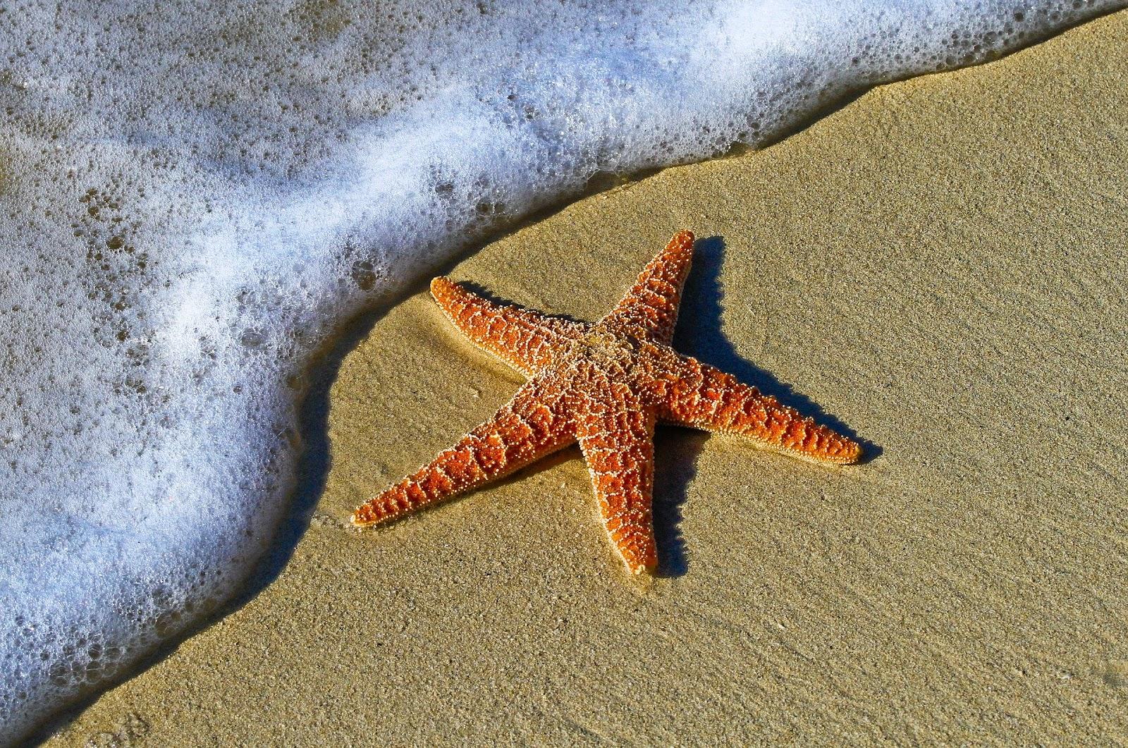 ¿Qué es la biología marina? Clasificación de organismos marinos.Organismos bentónicos . Organismos pelágicos Delfin organismos mar, biología, océano, que es la biología marina, clasificación organismos marinos
