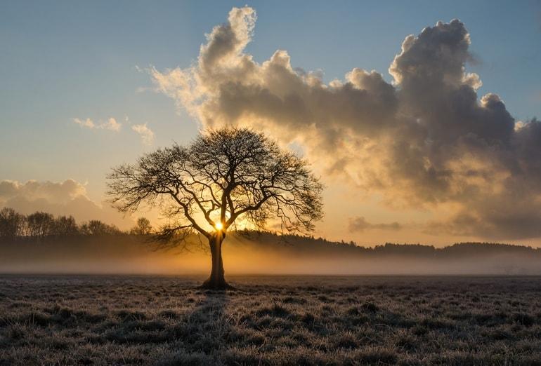Arvore e por do sol com nuvens