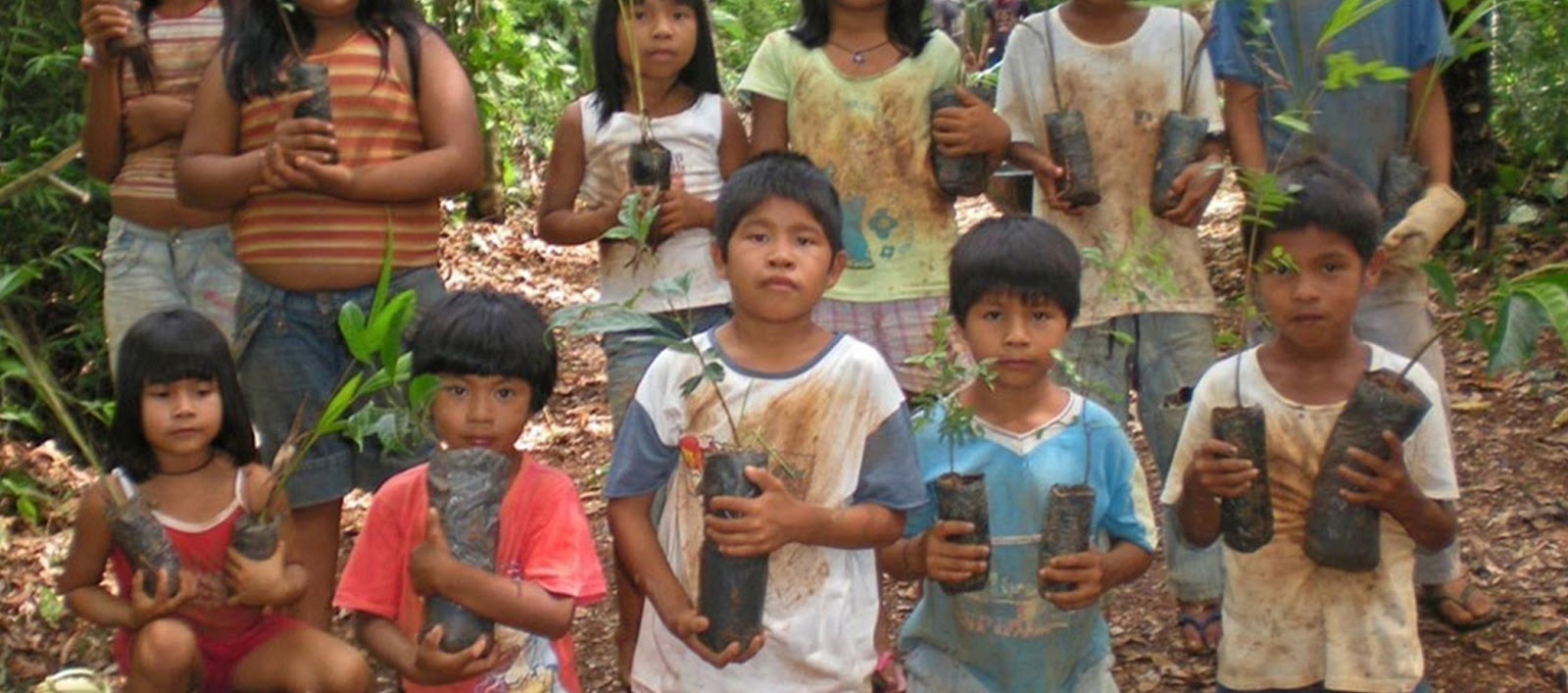 deforestation indigenous peoples and amazon