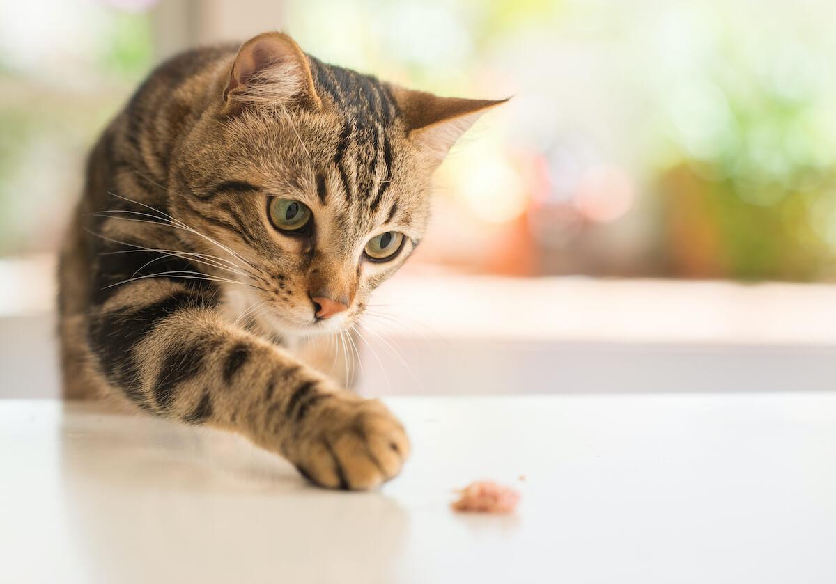 prenez le temps de jouer avec votre chat ou donnez lui de quoi jouer pour le distraire