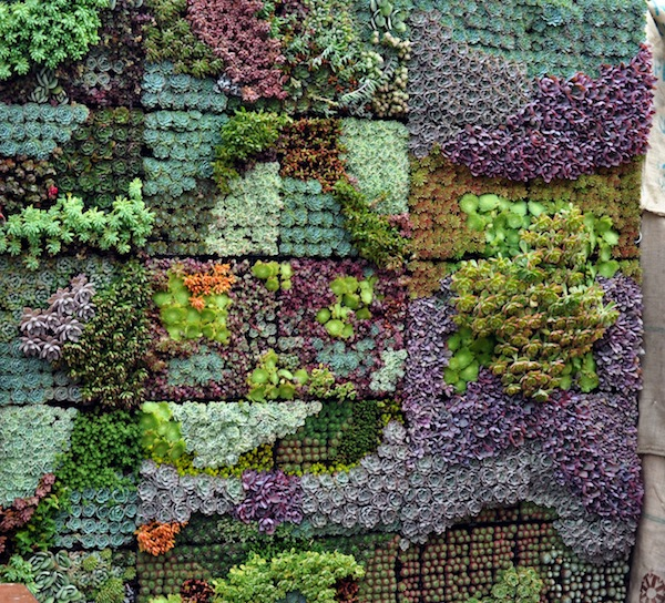 Vertical Garden Panel http://sgplants.com/articles/entry/vertical_gardening_panels_for_succulents