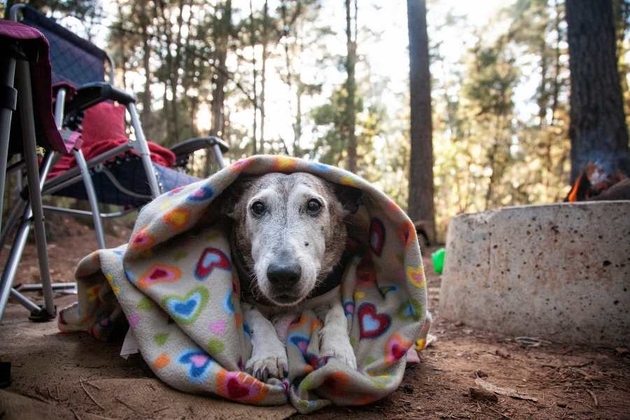 how to pick a camping blanket