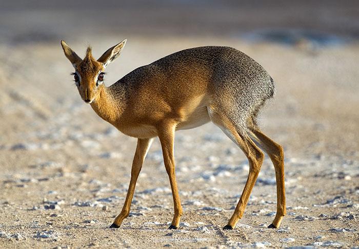 35 Weird, Unknown Animals