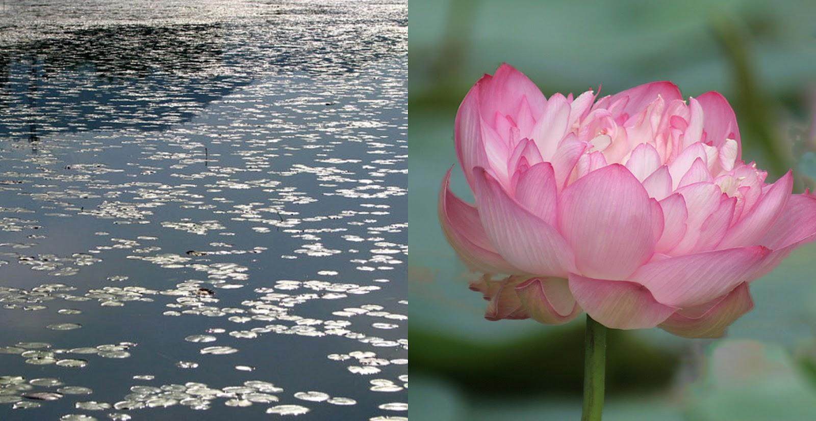 Flora and Fauna of  Dal Lake