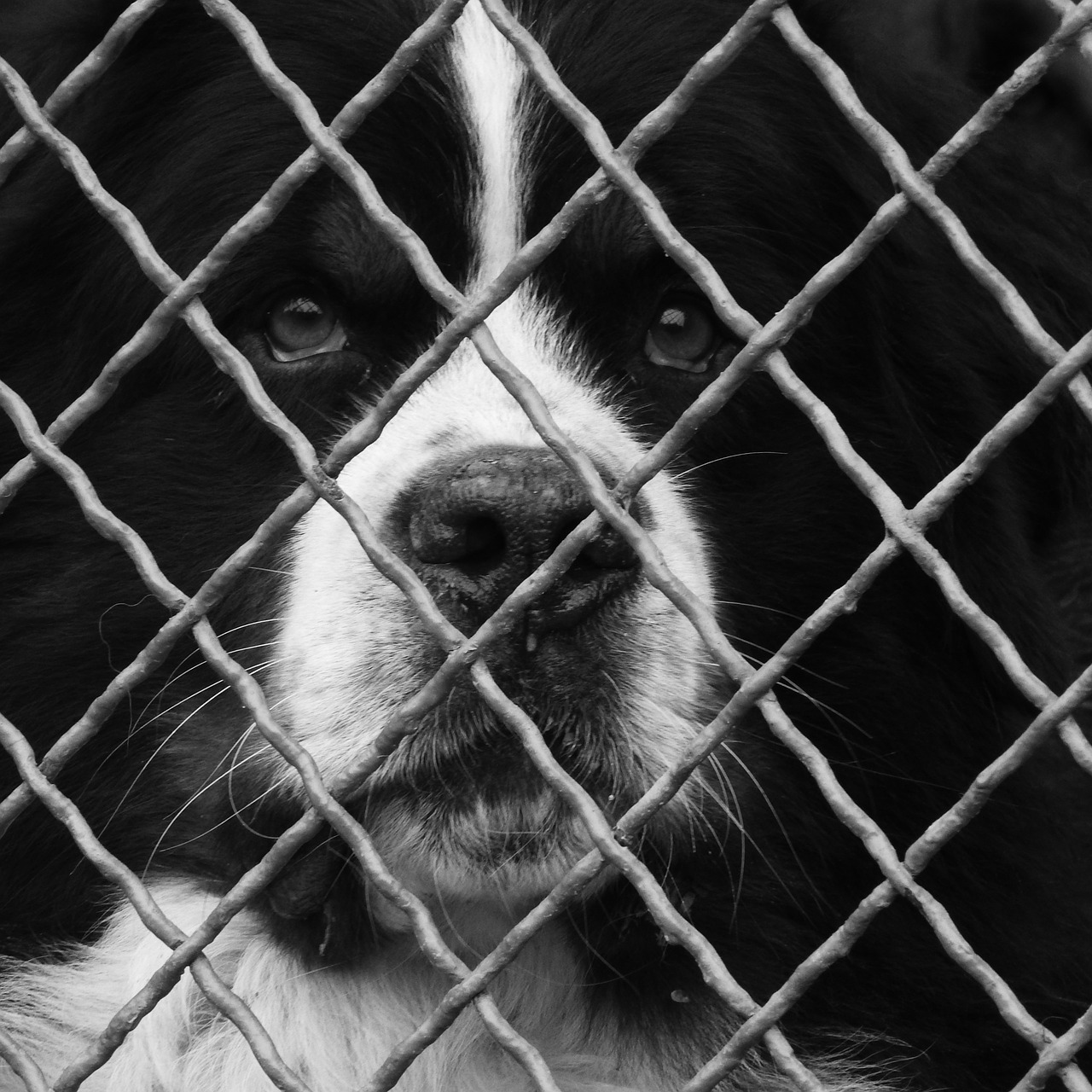 Humans can spot that this is a dog behind a fence. But can a CNN?
