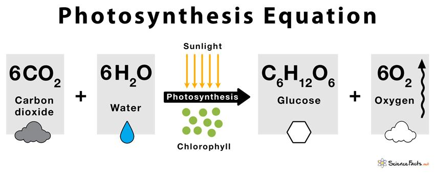Photosynthesis – Definition, Steps, and Formula with Diagram