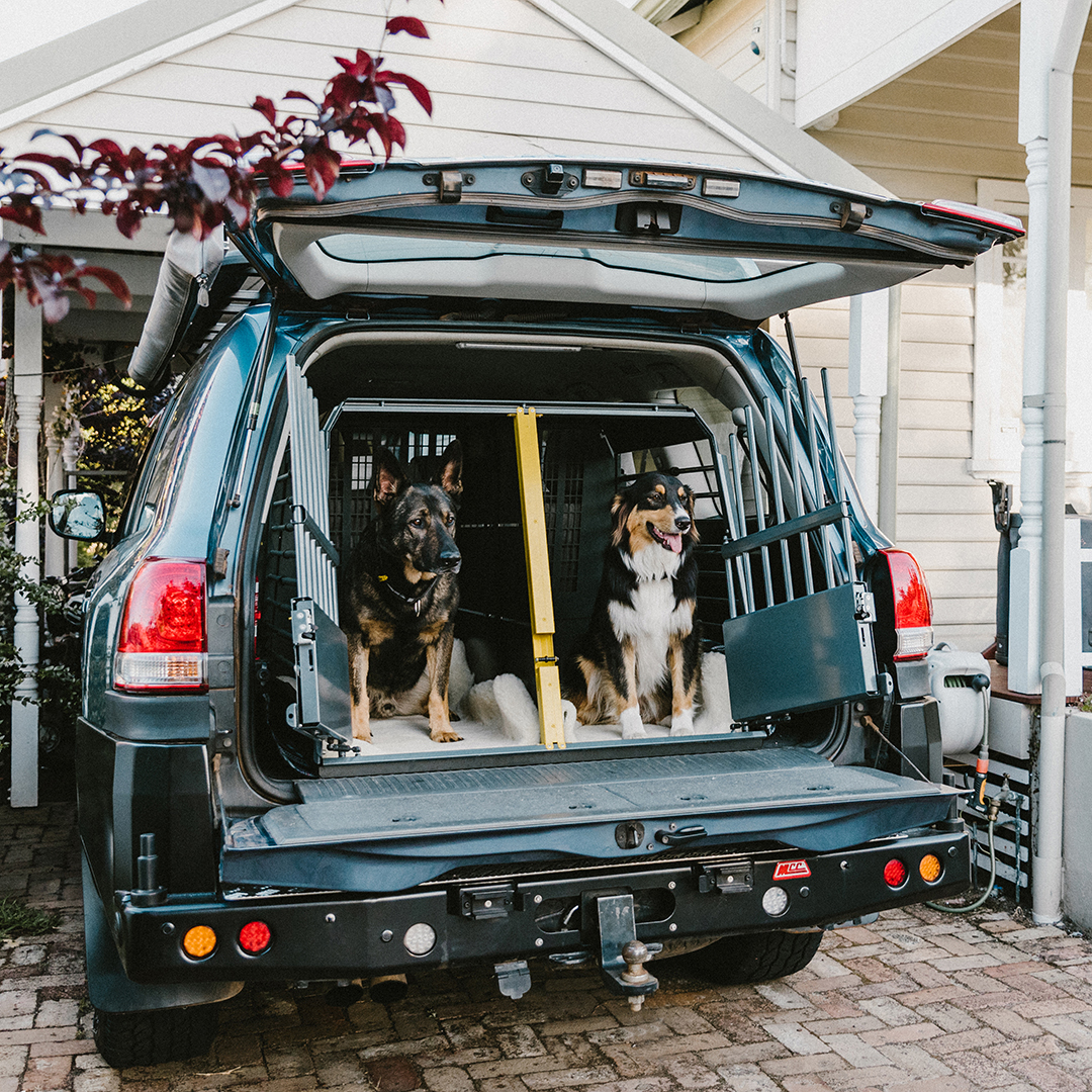 Two dogs in a dog cage at the back of an SUV