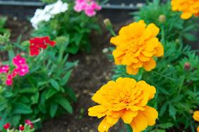 直売所を飾る花達