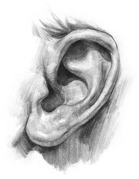 ear sketches