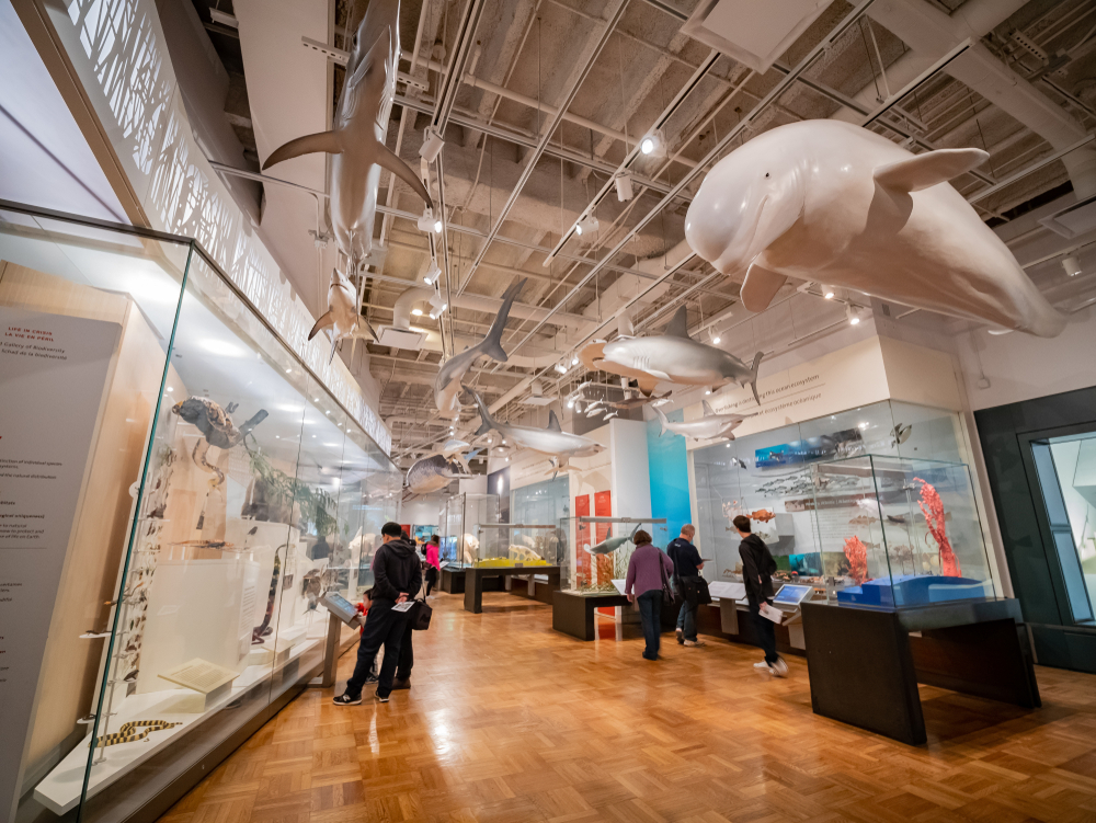 加拿大打工度假遊學留學canadaontariomuseum2