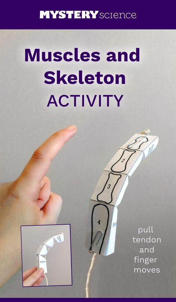 actividad con músculos de cartón