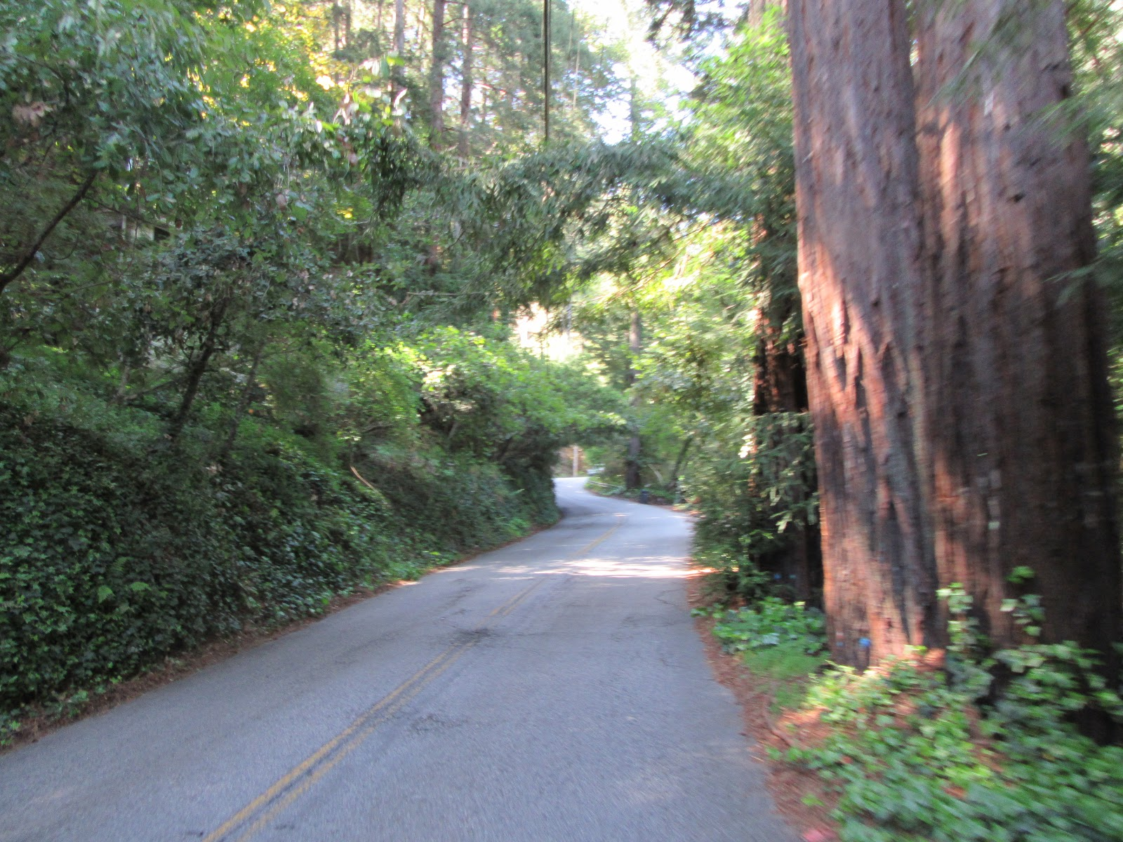 Redwood forest while cycling up Alba Road