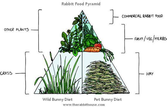 Image result for rabbit diet
