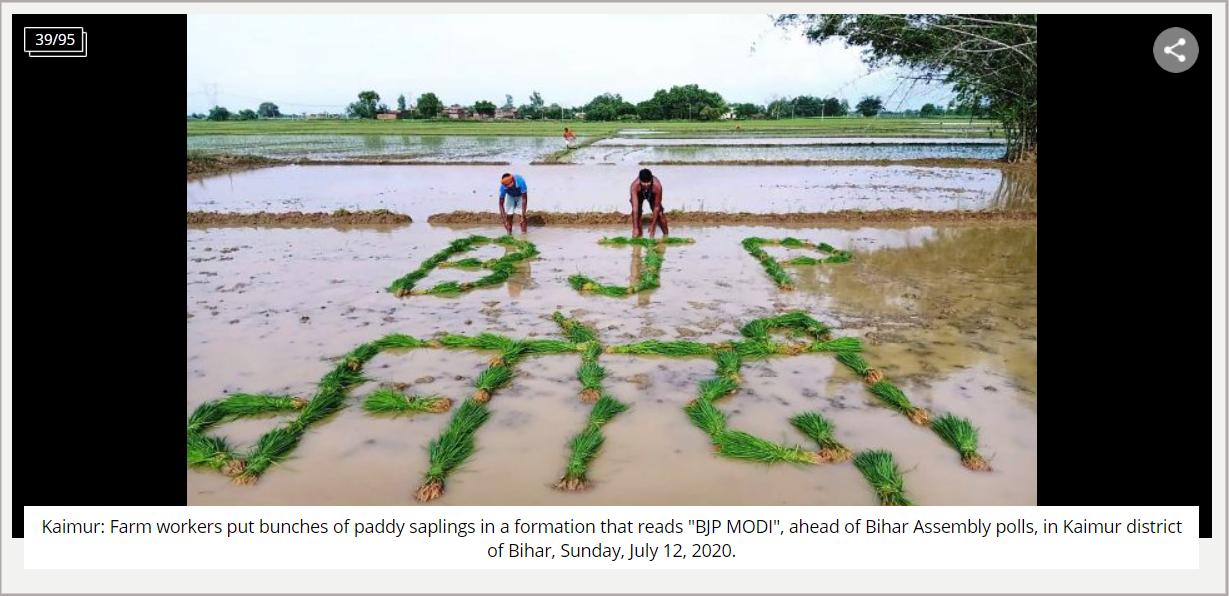 Farm workers put bunches of paddy saplings in a formation that reads BJP MODI 2.png