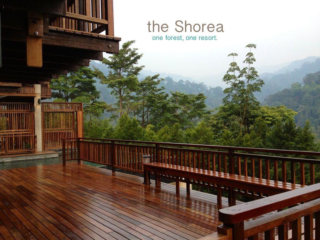 Image result for the shorea negeri sembilan