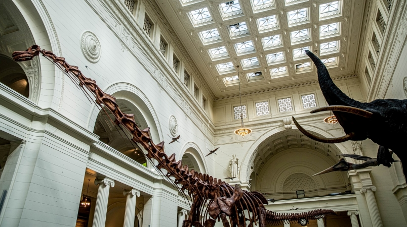 The Field Museum in Chicago