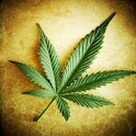 Marijuana Live Wallpaper apk