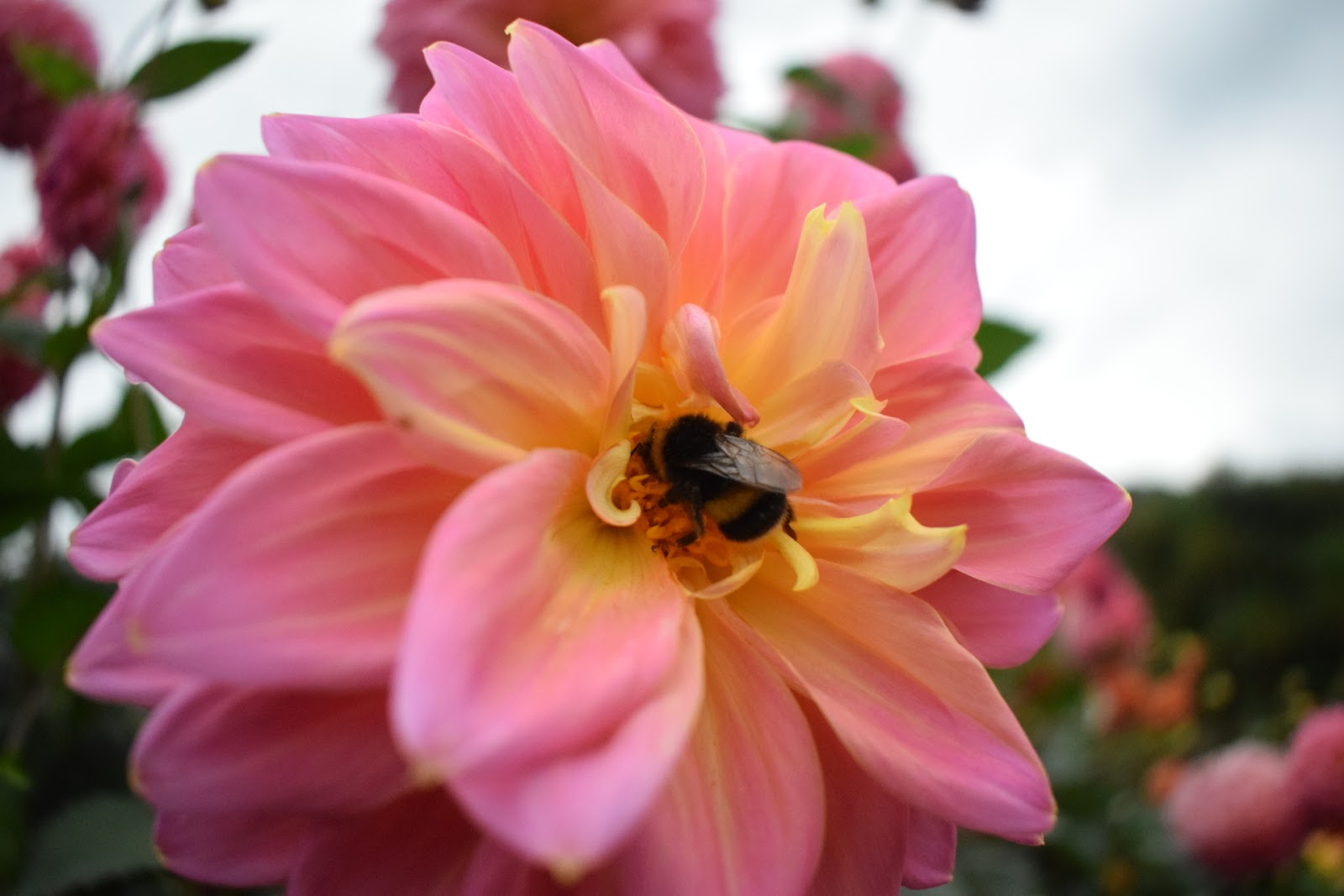 """(<img alt=""""bee on a rose"""">)"""
