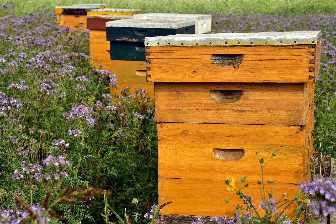Beehive Bees Bee Keeping - Free photo on Pixabay