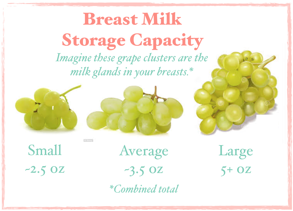 Diagram  storage capacity infographic using grapes as milk glands.  From LKN Breastfeeding Solutions