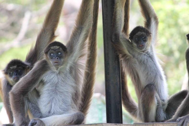 C:UsersInfanteDesktopAPORREA VERDUGOS DE LA PRENSAcarlos silva con perezozocarlos silva con manatiarñas.jpg