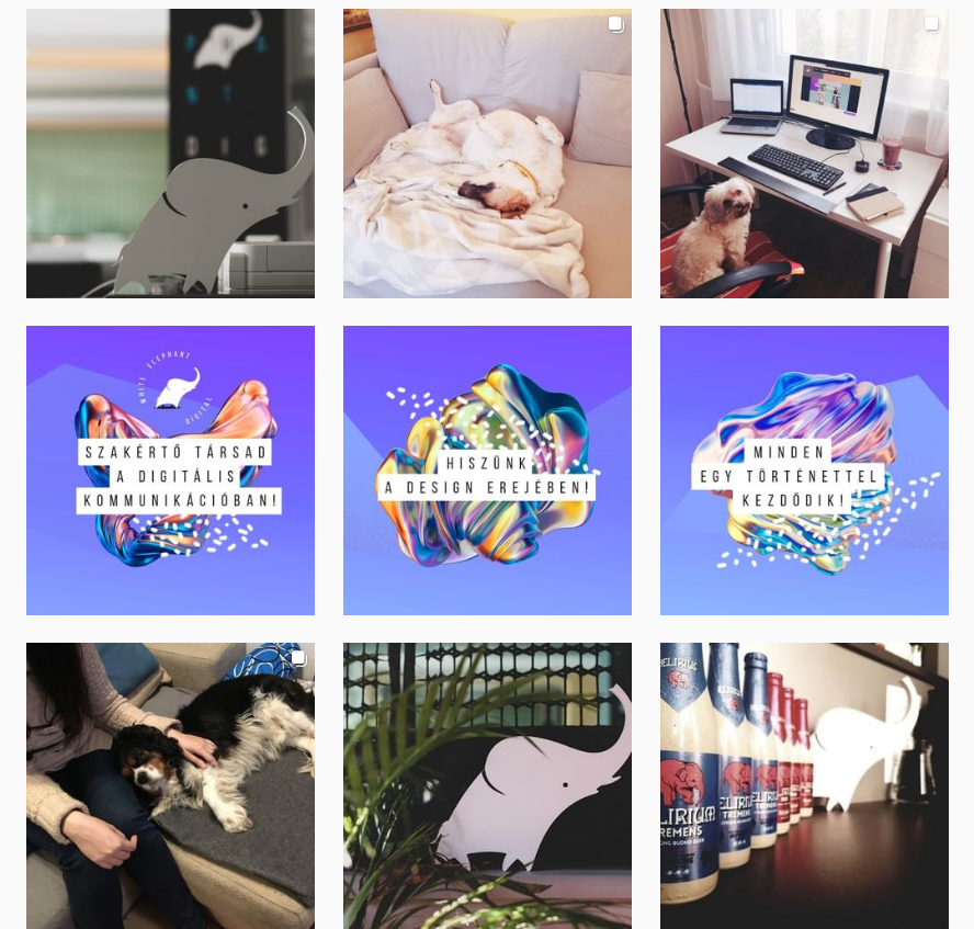 White Elephant Digital Instagram grid