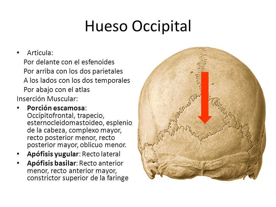 Asombroso Tcar Anatomía Hueso Temporal Imagen - Anatomía de Las ...