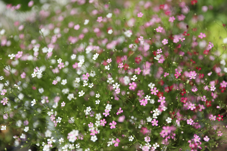 Chickweed, Hem Certification, Cuteness, Pink