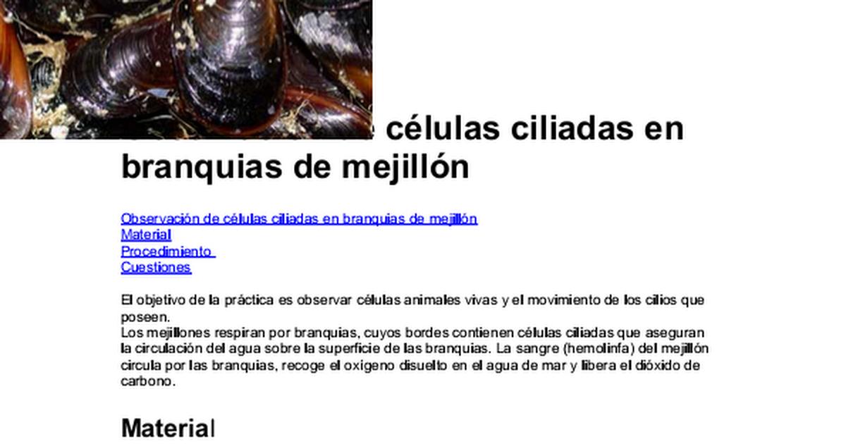 Hermosa Mejillón De Agua Dulce Anatomía Elaboración - Imágenes de ...