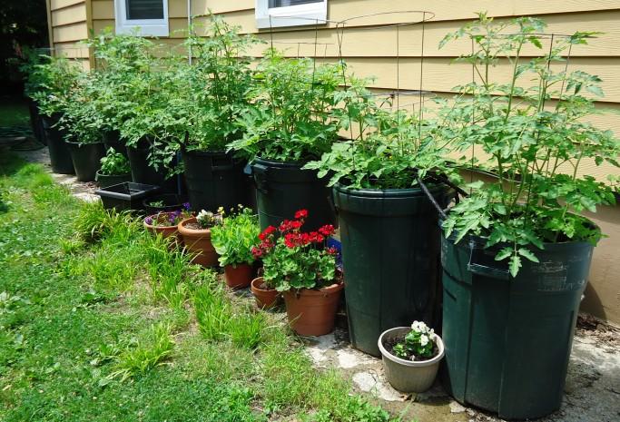 plantando em vaso