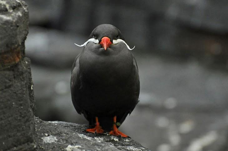 6. Inca Tern