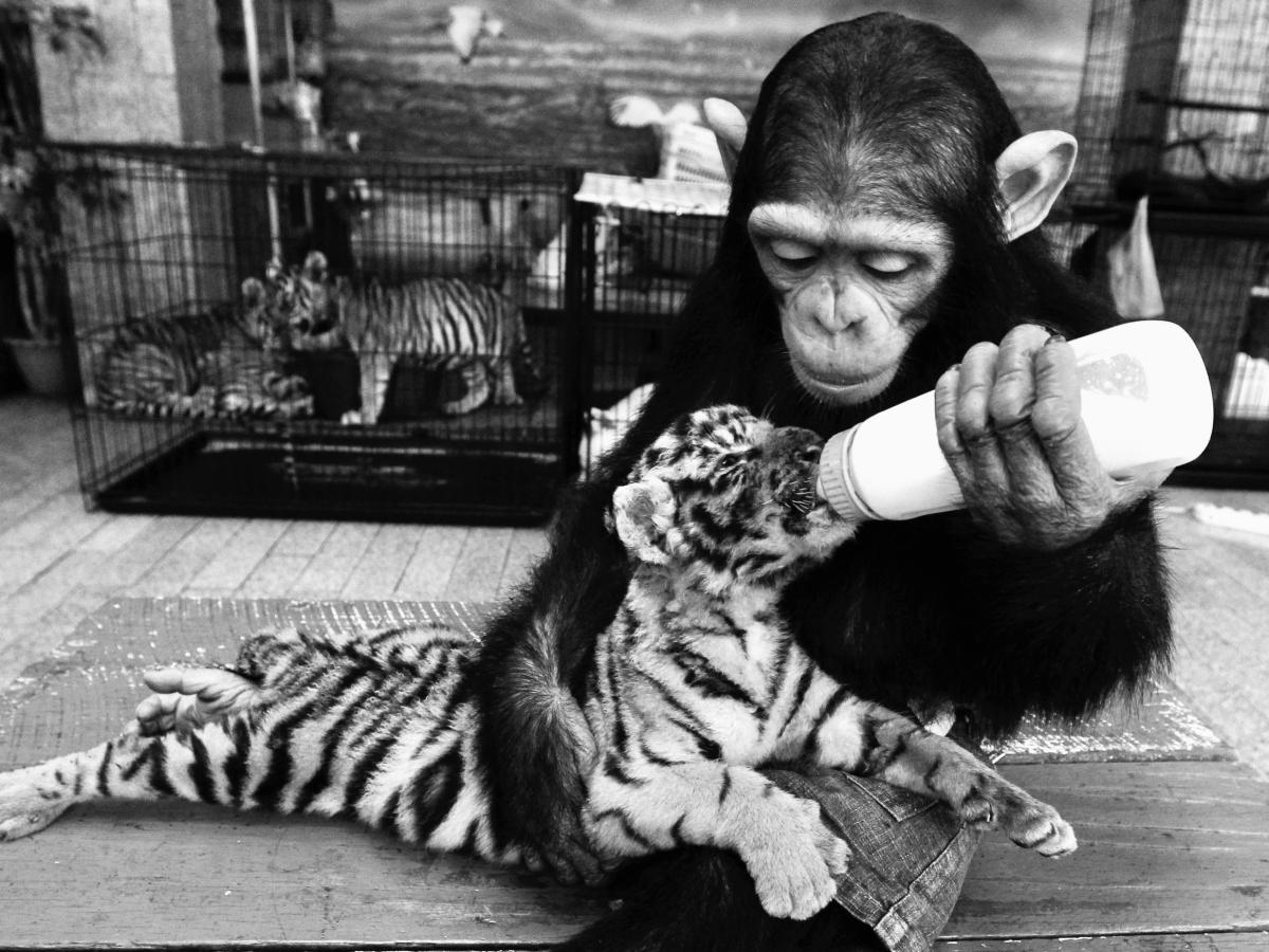 What the study of animal emotions shows us about being human — Quartz