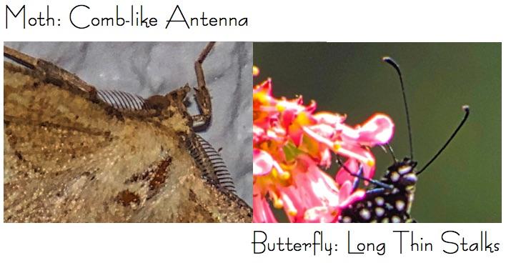 Antenna Comparison.jpg
